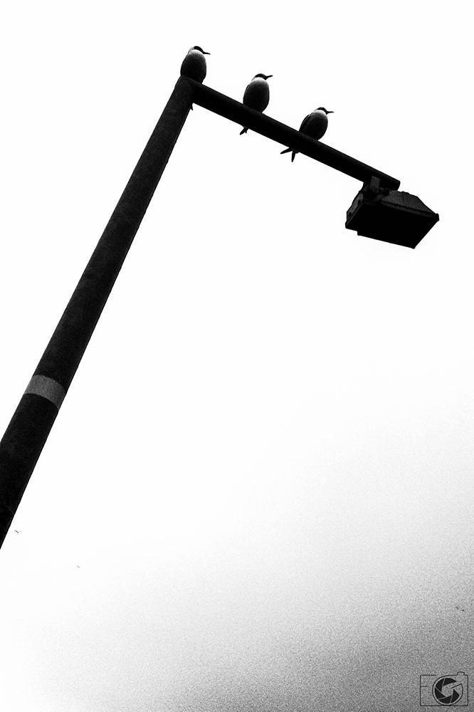 Black and white fabio gibelli photography - Black and wait ...